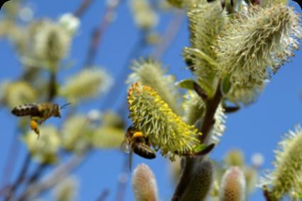 Pollenflug Kontaktlinsen Hamburg